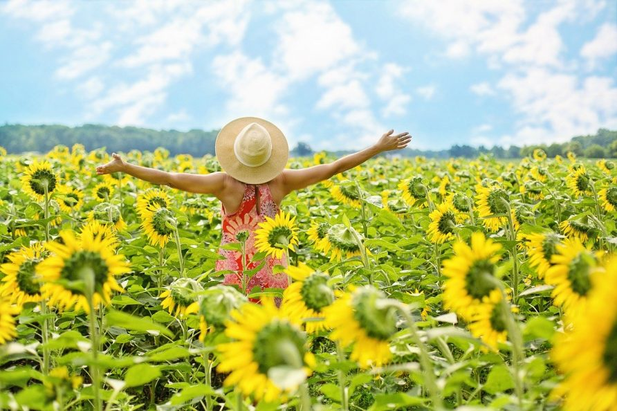 Sun Flower Fields, Karnataka